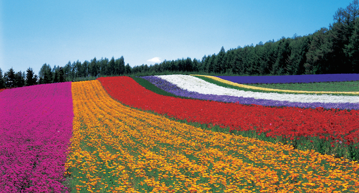 Đường hoa tại Furano