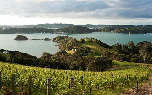 Hòn đảo tuyệt đẹp - Waiheke