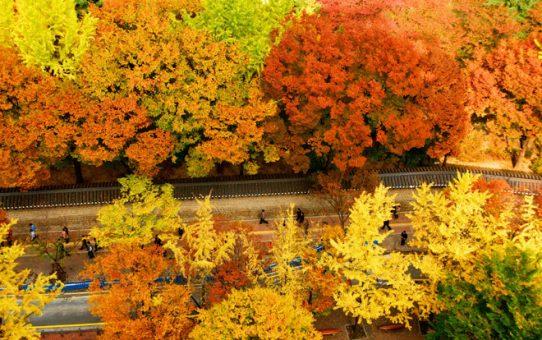 Rừng lá đỏ Hàn Quốc