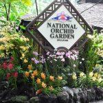 Du hí tại Vườn lan Quốc gia Singapore