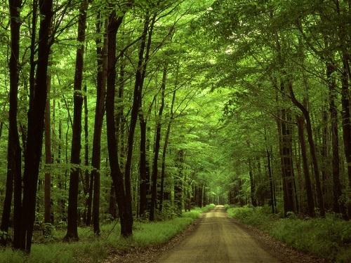 Con đường thơ mộng trong vườn quốc gia Nam Cát Tiên
