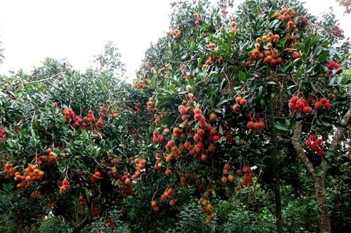 Vườn trái cây tại Long Khánh - Đồng Nai