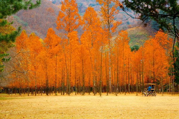 """5 địa điểm du lịch Hàn Quốc """"hot"""" nhất bạn không nên bỏ lỡ!"""