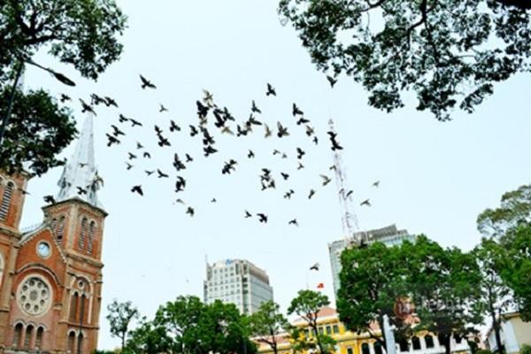 Đàn bồ câu bay đẹp mắt trên bầu trời