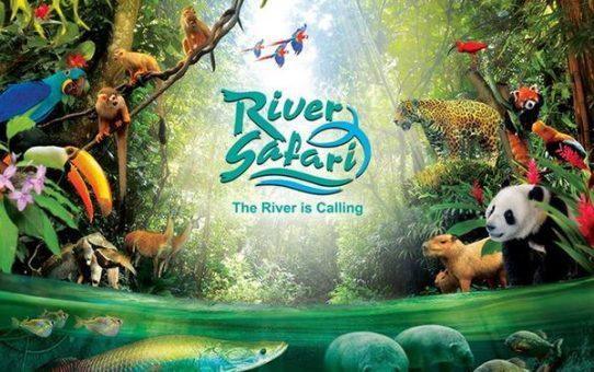 Du lịch công viên RIVER SAFARI tại Singapore