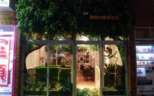 Đến với quán cafe cú tại Nhật Bản