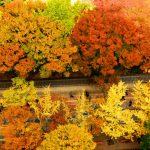 Ngắm rừng lá đỏ tại Hàn Quốc
