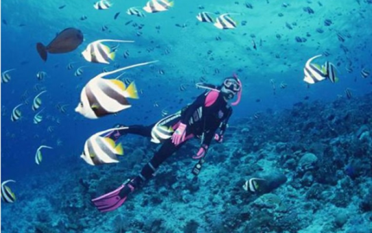 Những kiến thức cần chuẩn bị trước khi lặn biển ở Nha Trang