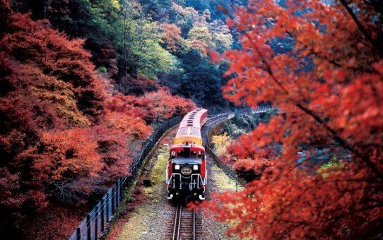 Ngắm lá phong trên tàu hỏa Nagano Romantic